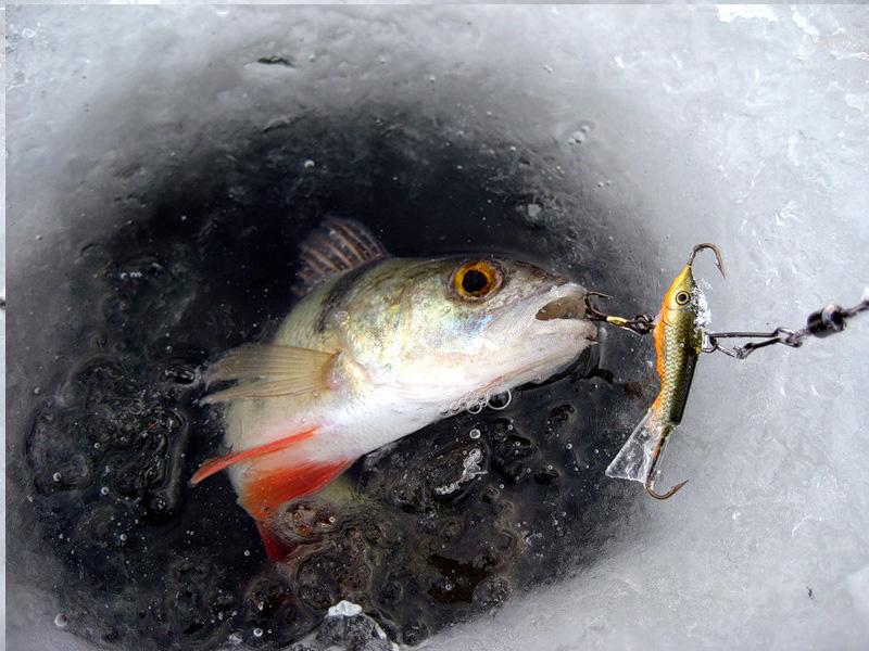 5171949_fish