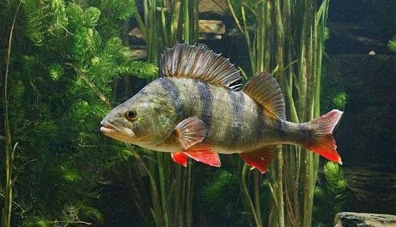 ТЕСТ: На сколько хорошо вы знайте речных рыб России!