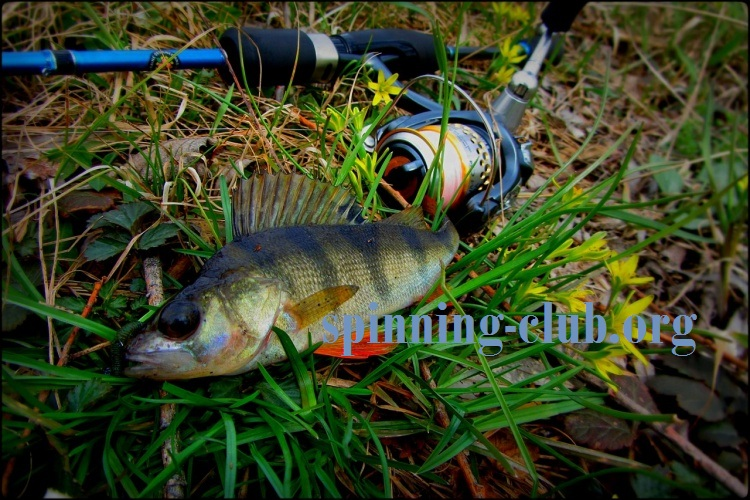 Весенняя рыбалка на окуня