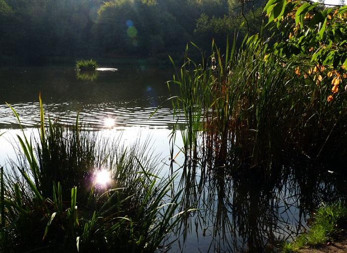Рыбалка в тихом месте